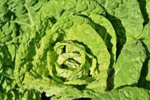 kohl, cabbage, vegetables