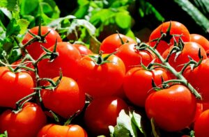 tomatoes, red, food